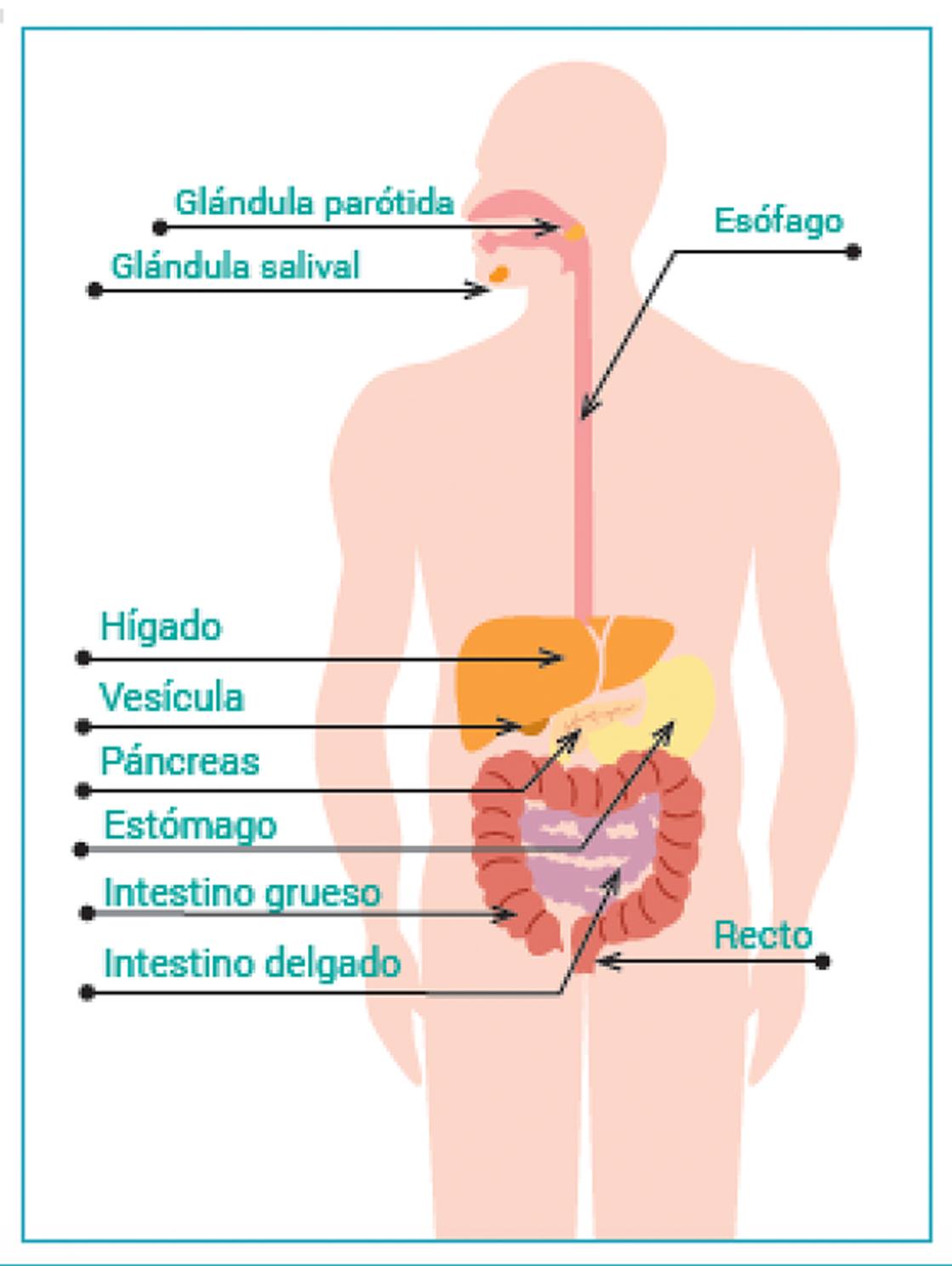 inflamacion intestinal dieta natural